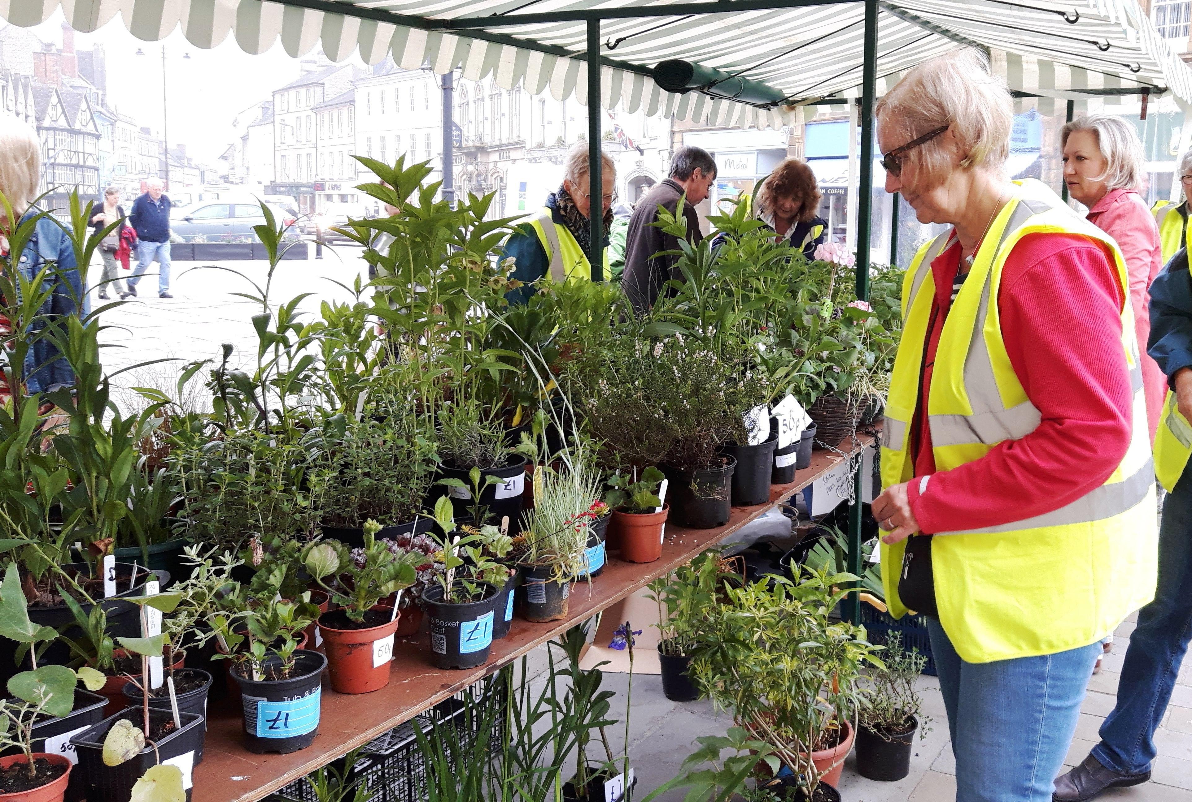 Alison at Plant Sale