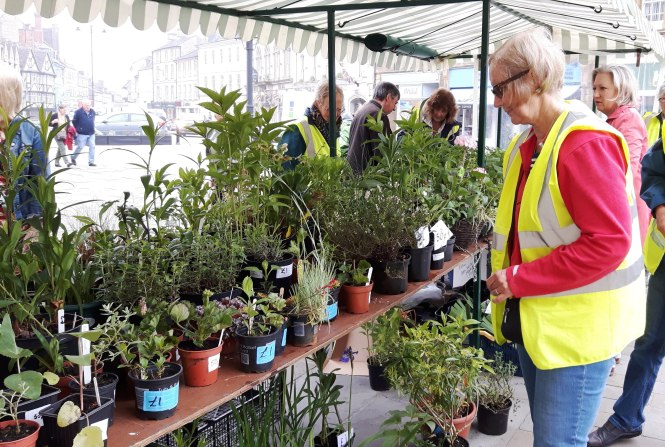 Alison at Plant Sale